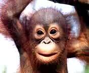 Happy Birthday greeting's from Simpanse