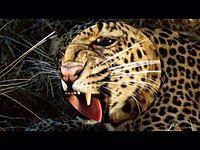 เสือ _ ฮันนี่ ภัสสร บุณยเกียรติ.mp4
