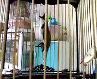YouTube        - นกหัวจุกลูกป้อนเพลงใต้.mp4