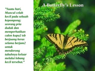 (4)BUTTERFLY_1(IND).pps
