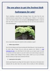 The one place to get the freshest Bulk hydrangeas for sale!.pdf